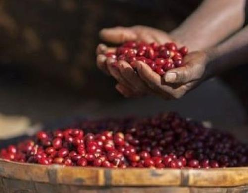 What Makes A Good Cup Of Coffee? At Araku We Get A Lesson