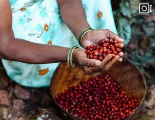 Brewing a Cup of Change – A National Geographic Documentary about Araku Coffee