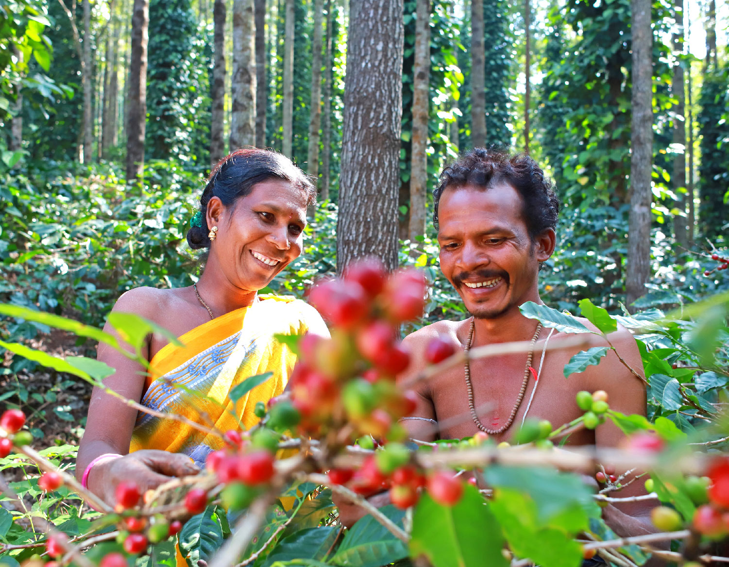 How coffee revived Araku Valley and its local farmers